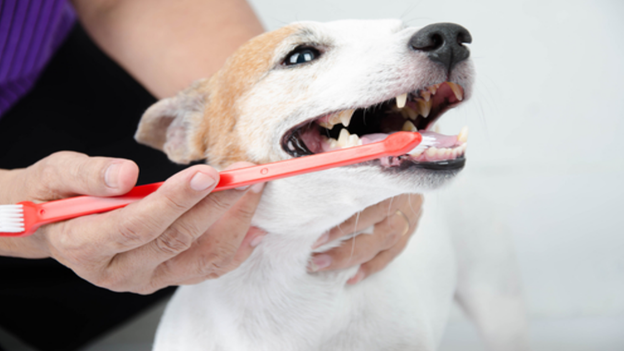 dog dental hygiene tips from valley ranch pet clinic in irving texas